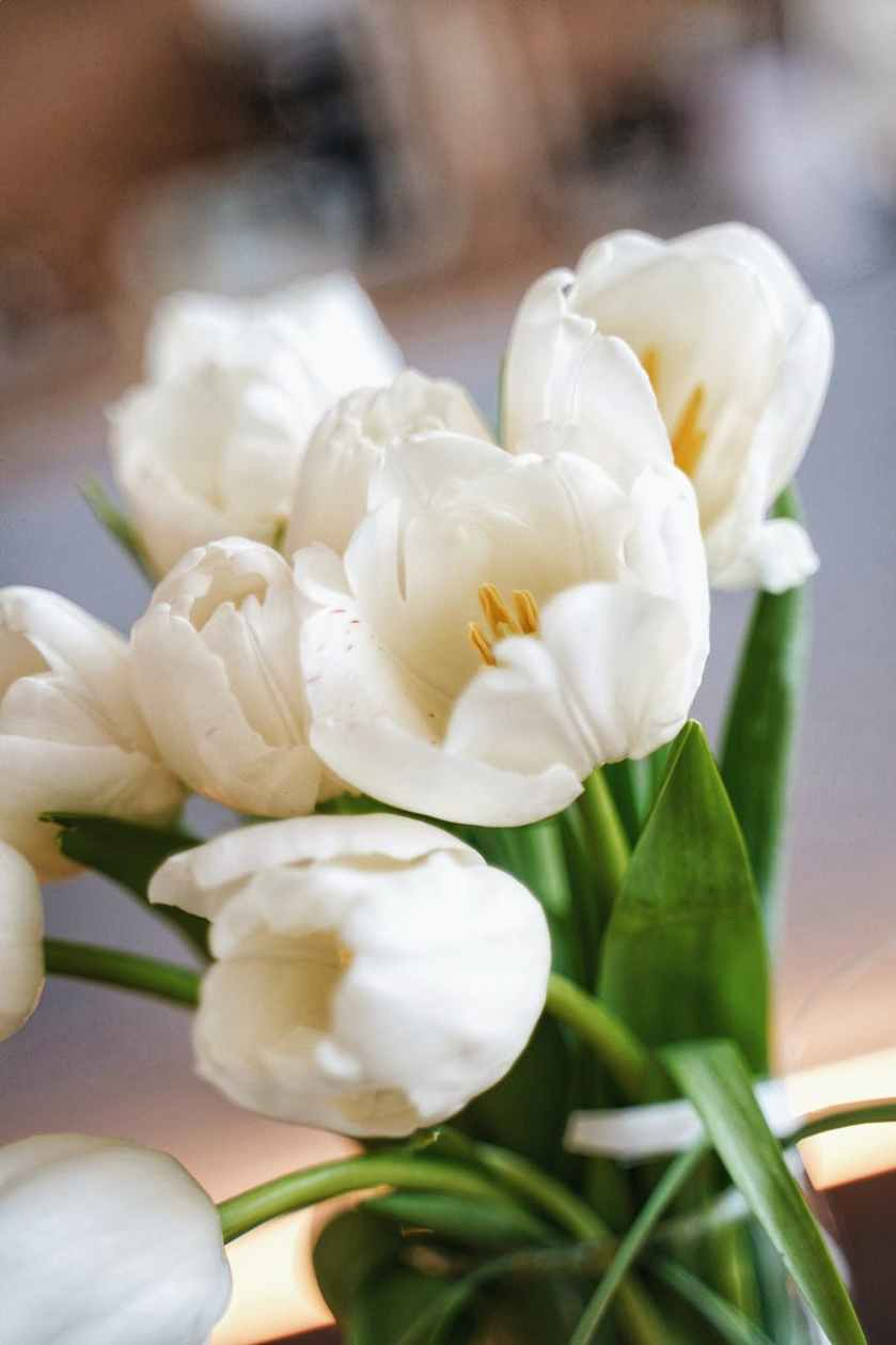 close up photo of white flowers